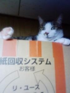 猫ちゃんのお部屋のガスファンヒーター清掃